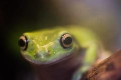 Peace Frog (Thomas Hawk) Tags: america citymuseum citymuseumstlouis missouri stlouis usa unitedstates unitedstatesofamerica frog us fav10 fav25 fav50 fav100