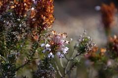 Anticipo.... (De carrusel) Tags: 2018 flores carrusel elbruc catalunya españa es