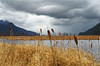Cat Tails Swaying (Kristian Francke) Tags: landscape pentax marsh bc canada dof depth field depthoffield nature natural naturephotography landscapephotography cloud storm