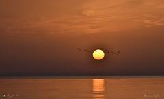 BUON GIORNO ! (Salvatore Lo Faro) Tags: alba natura nature sole riflessi uccelli volo rodi puglia italia italy lidodelsole salvatore lofaro nikon 7200