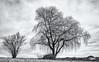 When the Days get brighter... (Ody on the mount) Tags: anlässe bäume em5ii filmkorn fototour himmel mzuiko918 omd olympus pflanzen schwäbischealb weide wolken bw monochrome sw