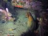 bvi 17 P8312444 (Pauline Walsh Jacobson) Tags: underwater scuba dive diving bvi water coral reef ocean sea marine life wideangle fish