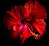 _TL72466_L (5816OL) Tags: dad flowers