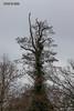 """Totholz"" (joergpeterjunk) Tags: leipzig lützschenastahmeln outdoor pflanze baum baumstamm totholz canoneos50d canonef70300mmf456isusm"