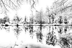Vision picturale (landrebeatrice) Tags: noiretblanc blackandwhite nature neige paysage forêt lac artistique art