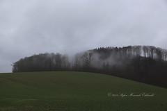 1801tierra001 (Stefan Heinrich Ehbrecht) Tags: terra tierra landschaft paisaje landscape pays winter invierno schnee snow nieve buche buchenwald beech fagus