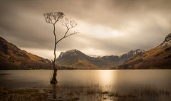 Buttermere Lone Tree (urfnick) Tags: cumbria thelakedistrict thelakes nationalpark canon eos 1300d longexposure le lonetree iconic buttermere sundaylights unitedkingdon greatbritain snow winter