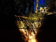 IMG_9292 (anisaheawad) Tags: morocco travel traveling nature digital marrakesh jardin majorelle