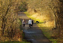 walkers stone lane hackenthorpe sheffield  (3) (Simon Dell Photography) Tags: uk garden brown nature wildlife simon dell photography sheffield shirebrook valley views horse silhouette s12 hackenthorpe 2018