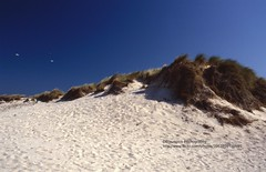 Near Pontevedra, Isla Arousa (blauepics) Tags: spanien spain espana landscape landschaft galicia galizien pontevedra isla insel island arousa water wasser coast küste beach strand sand shore ufer dune düne