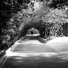 For ever (Go-tea 郭天) Tags: yantaishi shandongsheng chine cn yantai love couple candid back backside walk walking together feeling alone lonely power man woman young trees forest park arch path sun sunny winter shadow street urban city outside outdoor people bw bnw black white blackwhite blackandwhite monochrome naturallight natural light asia asian china chinese shandong canon eos 100d 24mm prime