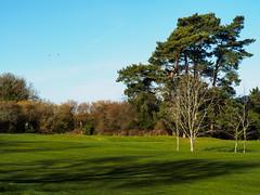Bramley Golf Course-E2160399 (tony.rummery) Tags: bramley em10 fairway flag golf golfcourse green landscape mft microfourthirds omd olympus pin surreyhills winter england unitedkingdom gb
