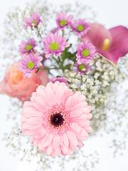 Flowers (janeway1973) Tags: schleierkraut babys breath rose calla pink rosa macro makro closeup nahaufnahme