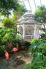 Key West (Florida) Trip 2017 7260Rif 4x6 (edgarandron - Busy!) Tags: florida keys floridakeys keywest butterflyhouse keywestbutterflyandnatureconservatory