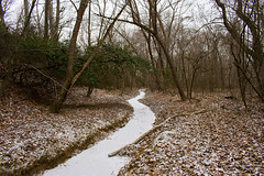 Frozen Stream (dzmears) Tags: winter peaceful woods water stream day overcast snow leaves grey forest park island cold pretty trees government green frozen