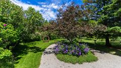 Bas-St-Laurent Métis 103 (Tasmanian58) Tags: metisgarden quebec canada batis218 batis zeiss lens sony a7ii flowers tree bench art