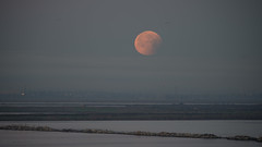 Super Blue Moonset (tourtrophy) Tags: bluemoon supermoon alviso southbay sanjosesouthbay sunnyvale moonset moon sonya7rii canonef100400mmf4556liiisusm metaboneseftoesmartadapterv