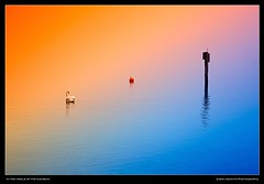 In the Middle of the Rainbow (Yarin Asanth) Tags: orange swan blue überlingen nebel bodensee mist fog rainbow reflections surface water lakeconstance winter2018 yarinasanthphotography gerdkozikfotografie