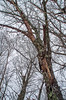 Mystery Tree (FlappinMothra) Tags: minnesota master naturalist long lake conservation center llcc aitkin county palisade minn mn university extension course class education certification certificate outdoors nature north woods great lakes biome northwoods forest forestry field ecology biology department natural recources dnr winter week wonders martha decker vispo recreation area pentax k30 tamron 18200 zoom lens
