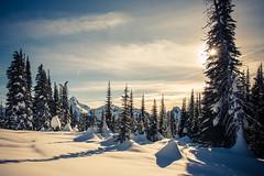 Snow and Sun (ValeTer_) Tags: nikond7500 mtrainiernationalpark nationalpark usa wa washingtonstate rainier snow winter nikon d7500