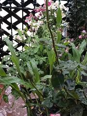 Rain on New Plants - 2 (Chic Bee) Tags: rain plants veranda flowers tucson arizona vegetables herbs garden gardening