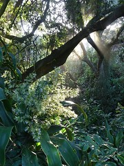 coastal forest, KwaZulu-Natal