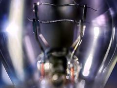 Double wired (BeMo52) Tags: auto bremslicht car glühlampe lessthananinch licht light lightbulb macro macromondays makro rücklicht schlusslicht stoplight zweifadenglühlampe