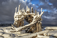 McGnarly (Paul Rioux) Tags: mcgnarly driftwood beach creature art sculpture snow winter cold frost chilly season seasonal waterfront seashore seaside logs outdoor clouds sky monster character prioux