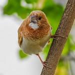A Bird with Some Attitude thumbnail