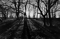 Wombourne Woods (Dave.Miles) Tags: wombourne trees olympus olympusom10 zuiko redfilter 24mm 24mmlens ilford ilfordxp2 film filmisnotdead 35mm 35mmfilm analogue staffordshire