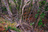 forest (SirakoM) Tags: nature forest autumn color tree leaves foliage fall istra istria koštabona slovenia slovenija light roots branch outdoor hiking nikon d7100 nikond7100