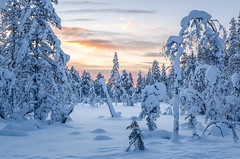 Sunrise (tods_photo) Tags: ifttt 500px sunrise frozen winter sun snow ice frost snowing blizzard snowdrift snowcapped cold temperature fir tree warm clothing