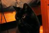 (Maddilly M.G.) Tags: chatnoir chat cat beauté beauty black blackcat intérieur indoors portrait portraiture animal animals animaldomestique félin feline yellow orange love catlover photography night evening beautifuleyes look regard eyes catseyes