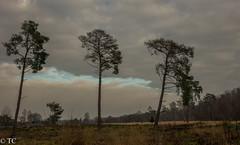 Een streepje blauw/A line of blue (truus1949) Tags: wandelen strabrechtse heide bewolkt bomen natuur landschap licht winter