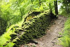 Road (chrisshm) Tags: moss hiking forest england