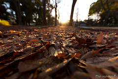 Refreshing morning (w-nomad) Tags: sunrise fallenleaves morning tree wood japan