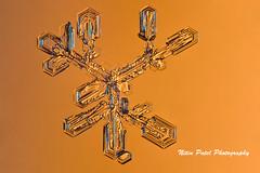 IMG_2718 (nitinpatel2) Tags: snowflakes winter snow macro crystal nature nitinpatel