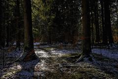 Durch den dunklen Wald (Helmut Reichelt) Tags: wald dunkel schnee geretsried februar winter waldwinter bayern bavaria deutschland germany leica leicam typ240 captureone11 dxophotolab leicasummilux35mmf14asphii