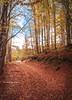 Abruzzo (Mary-Eloise) Tags: abruzzo wood forest wow autumn fall italy nikon d90