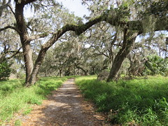 Shady Oaks Trail (Gerald (Wayne) Prout) Tags: shadyoakstrail circlebbarreserve cityoflakeland polkcounty florida usa prout geraldwayneprout canon canonpowershotsx60hs powershot sx60 hs digital camera photographed photography scenery shady oaks trail circleb bar reserve trails walking sightseeing nature wildlife birds city lakeland winterhaven polk county stateofflorida