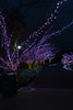 20180203_175256_DSC02935.jpg (okyawa) Tags: 2018 遊園地 ひらかたパーク 景色 夜景 star2 枚方市 大阪府 日本 jp