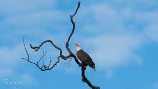 Bald Eagles of the Jersey Shore | 2018 - 19