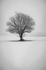 The Tree (OLYMax1234) Tags: winter nebel fog snow tree magic silence stille