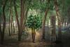 Hyacinth Man (Muhammad Rony) Tags: man gree hyacinth tree colors portrait