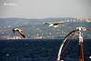 Gaviotas (Eva Cocca) Tags: gaviotas naturaleza nature cielo sky mar sea barco ship océano ocean seagull