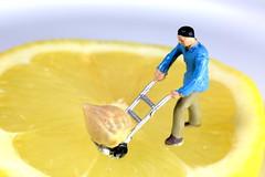 AD8A6598_p (thebiblioholic) Tags: citrus macromondays lemon seed pip tiny macro closeup lensbaby velvet56 kenko miniature tumblr