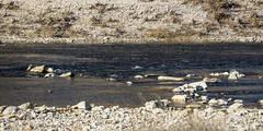 gardon (rey perezoso) Tags: 2017 gard river stones eu france europa gardon rive ufer rock water fluss winter hiver colors pebbles