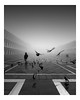 Take Flight (vulture labs) Tags: street fine art venice fog beautiful bw black white mono monochrome nikon zeiss