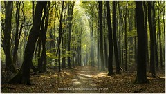 """Follow the light"", Netherlands (CvK Photography) Tags: light sunray autumn autumncolors canon color cvk europe fall forest gelderland nature netherlands outdoor speulderbos veluwe ermelo nederland nl"