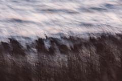 Am Schilfsaum (IIIfbIII) Tags: art blässhuhn lake tollensesee schilf ufer naturephotography fantasticnature bird water neubrandenburg mecklenburg mv photography winter cold langzeitbelichtung bewegung wischer welle canon